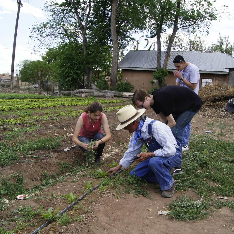 High school students planting crops at Grow the Future in the South Valley near Albuquerque.