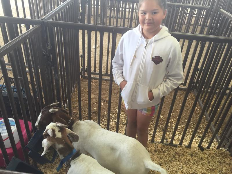 10-year old Abigail Suskey is excited that the two goats she raised this year are bulky enough to not be stuck in the cabrillito category at the Sandoval County Fair.