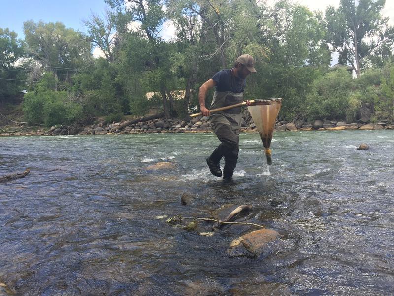 Biologists are sampling macro-invertebrates along the Animas and San Juan rivers.