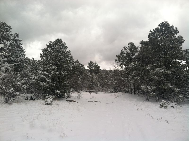 Meteorologist says El Niño could drop significant amounts of snow in NM over the winter.