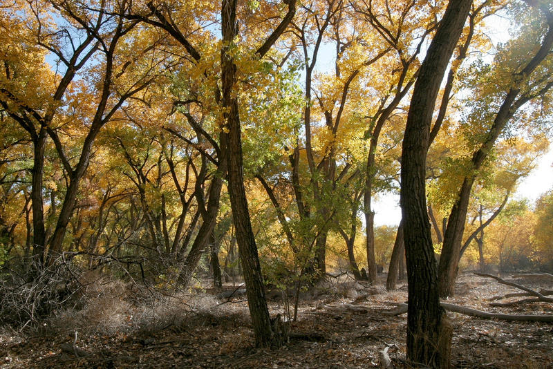 At the Bosque sticks and branches on the ground pose a fire risk.