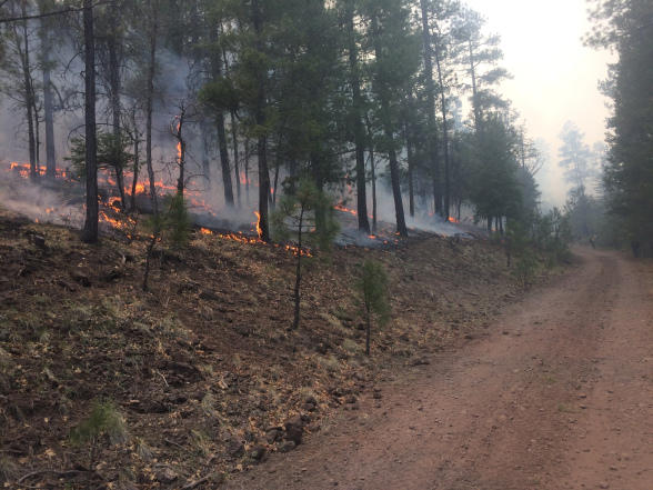 Kerr Wildfire in the Gila National Forest