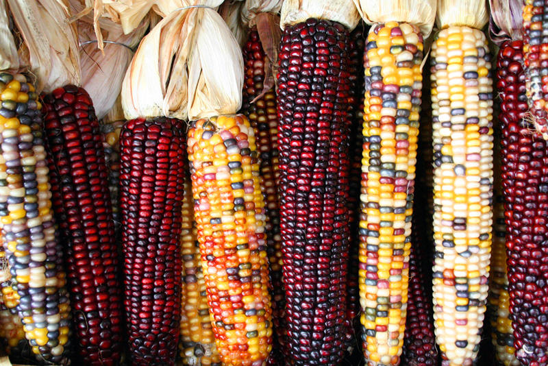 There are nearly 24,000 farms in New Mexico, and the top crops include: pecans, hay, onions, chile, cotton and corn, according to Farm Flavor.