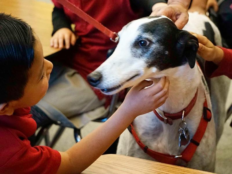 Rico the therapy dog