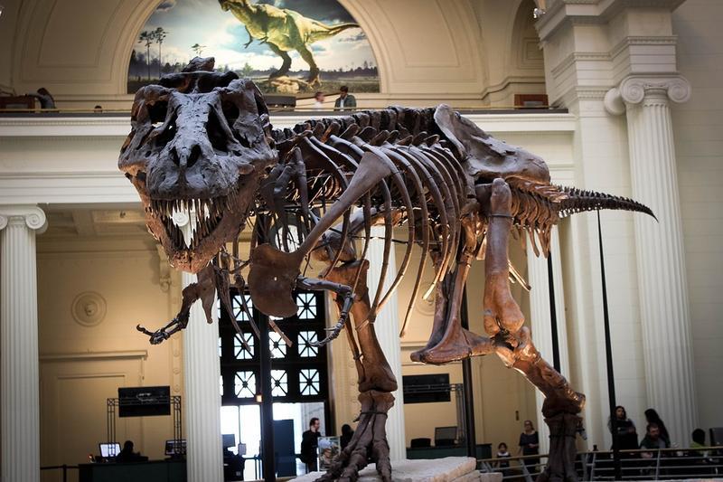 Tyrannosaur Skeleton