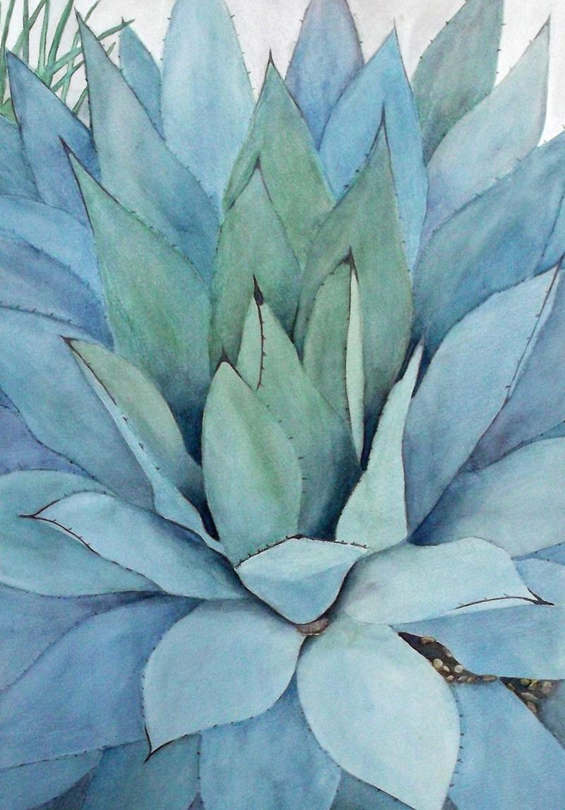 Agave, watercolor by Janine Wilson is part of Biologique on exhibit now at the New Mexico Art League.