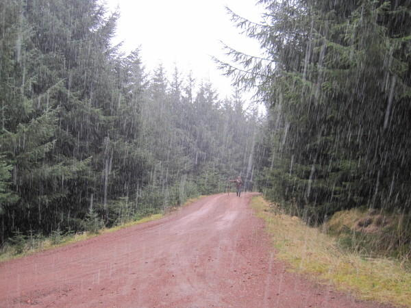 Heavy Rain On A Forest Trail