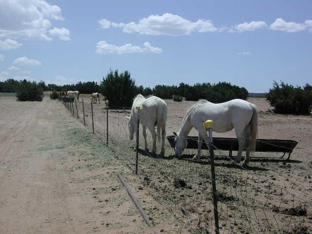 Horses out to pasture on a 40 acre lot, part of The Horse Shelter's 200 acre property off Highway 14 near Cerrillos, NM.