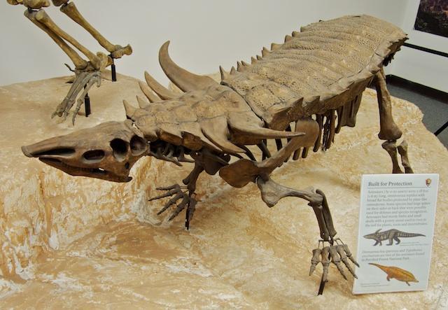 Aetosaur.