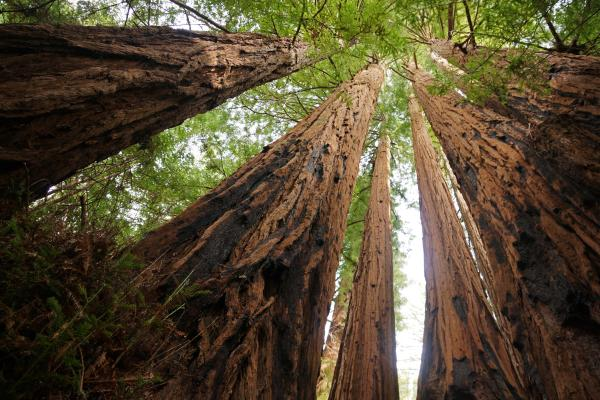 "Allie_Caulfield via Compfight cc—Aja Riggs stopped by the Muir Woods National Monument to see the giant redwoods. ""To walk among them is like being in some kind of temple or sanctuary,"" she says."