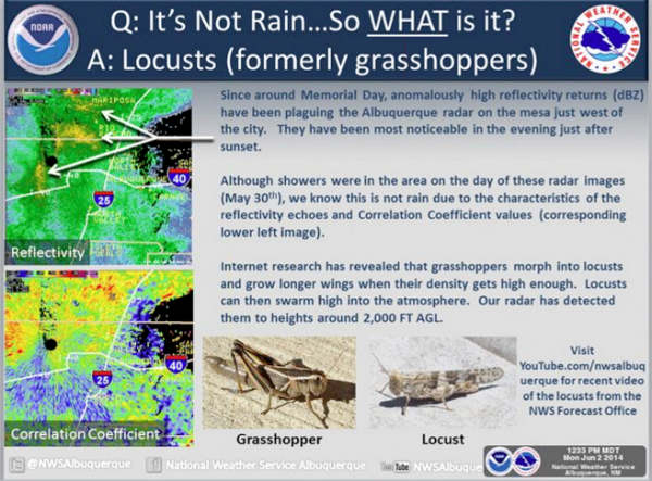 The high reflectivity returns showing up on the National Weather Service radar in Albuquerque are mutated grasshoppers.