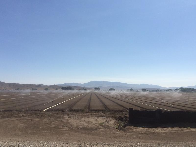 A field is irrigated with sprinklers. Many farmers have been unable to grow crops with water restrictions so severe.