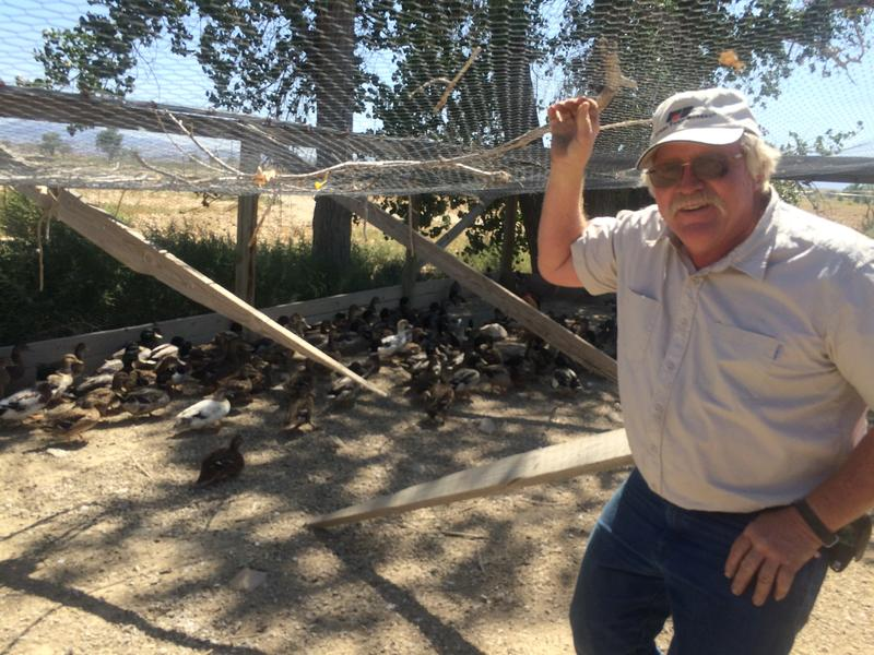 Darrell Pursel is a fifth generation farmer in Yerington. Unable to irrigate crops, he's trying to raise ducks and pheasants instead.