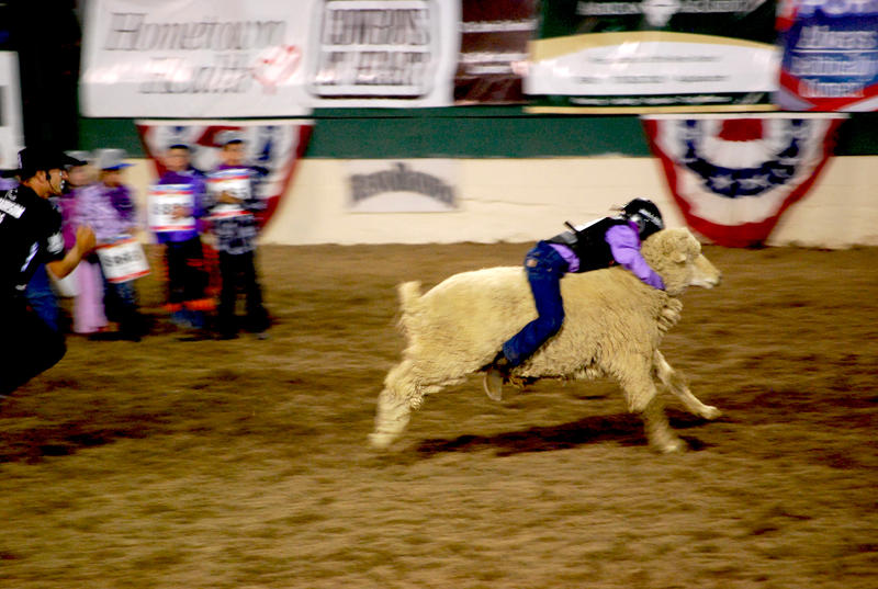 Children hold on tight to sheep in the Mutton Bustin' event.