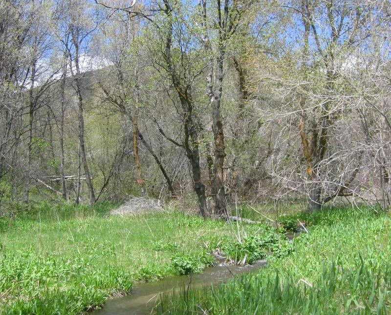 Box elder trees could face greater challenges due to the effects of climate change.