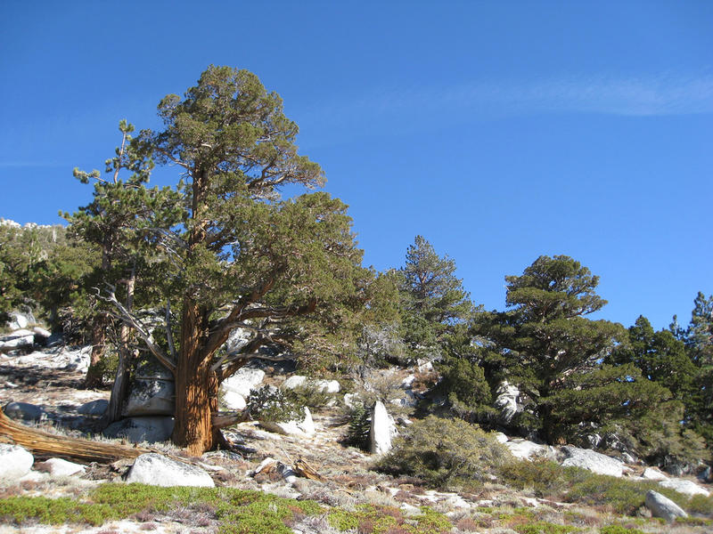 An image taken from the Tahoe Rim Trail.