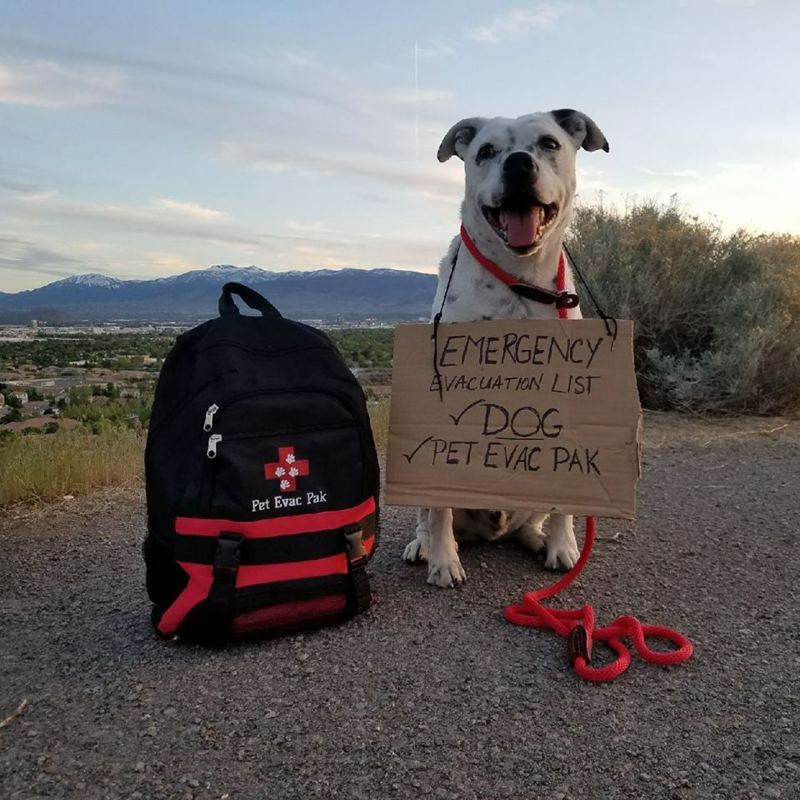 "Dog standing next to a backpack labeled ""Pet Evac Pak"" with a sign around its neck reading ""Emergency Evacuation List..."""