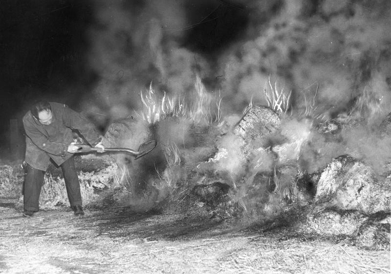 A firefighter works to suppress a forest fire, circa 1920-1930.