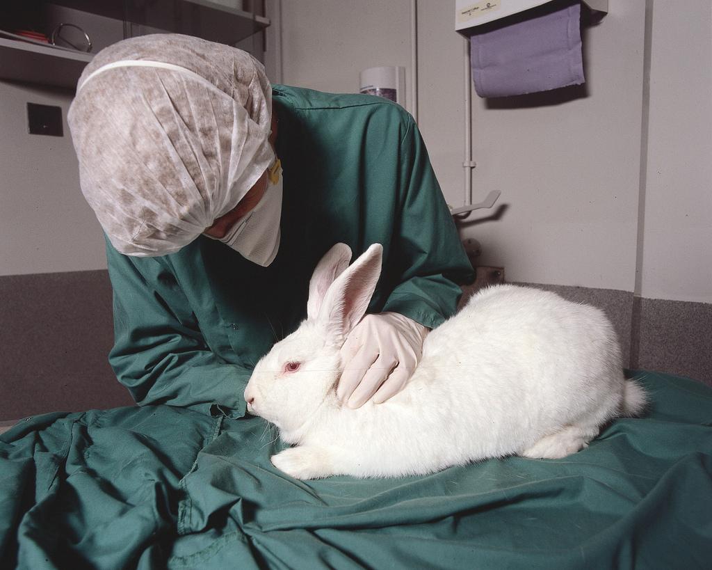лабораторный кролик