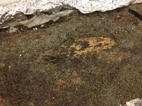The fossilized tusk is caked in sediment at the moment, but rub off some of the dirt, and you'll see the beige colored tusk underneath.