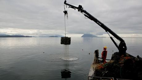 Taylor Shellfish crews haul out oysters from Samish Bay that had been picked the night before. The Northwest's shellfish industry is one of the first to feel the impacts of ocean acidification.