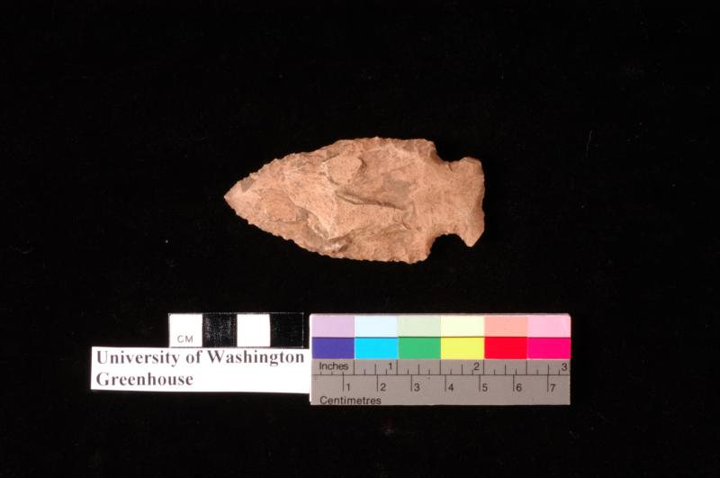 The point of this native spear head is big enough that it was likely used to hunt large land mammals like deer or elk in the Seattle area. This spear point was found near the Burke-Gilman trail on the University of Washington campus.