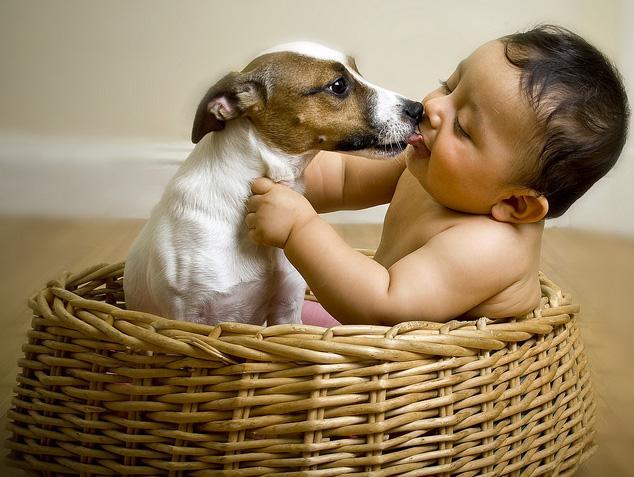 Baby v. dog