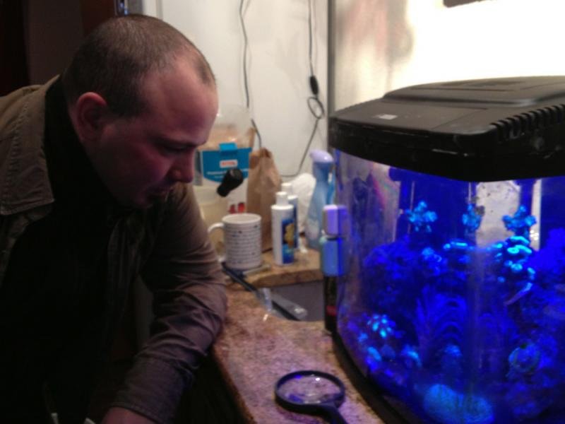 Jon Buckland collects sea corals. It's a hobby that keeps him busy. Watching the sea creatures relaxes him.