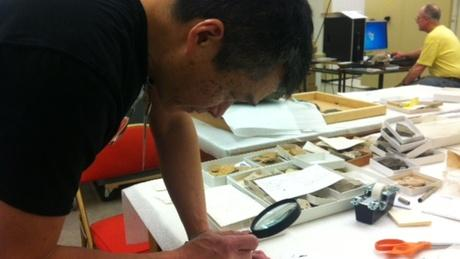 Ron Eng is a geologist at the Burke Museum. He took a look at samples collected by a diver in the water near Seattle's Ballard Locks. He thinks it could be coal.