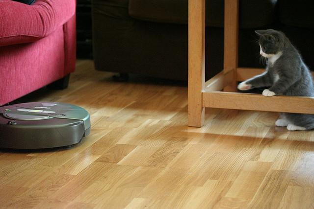 The helpful robotic vacuum. The cat is not so convinced.