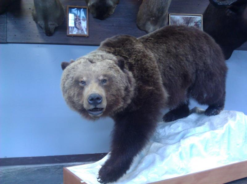 A brown bear waits for his new home at the Pacific Galleries warehouse.