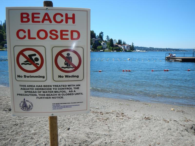Signs (and an unseen lifeguard) deter swimmers at Bellevue's Meydenbauer Beach Park until herbicide sprayed nearby has had 24 hours to settle to the bottom of Lake Washington.