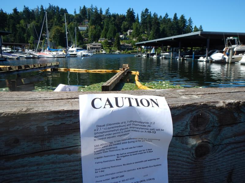 The Bellevue Marina on Meydenbauer Bay, sprayed Monday morning for Eurasian watermilfoil.