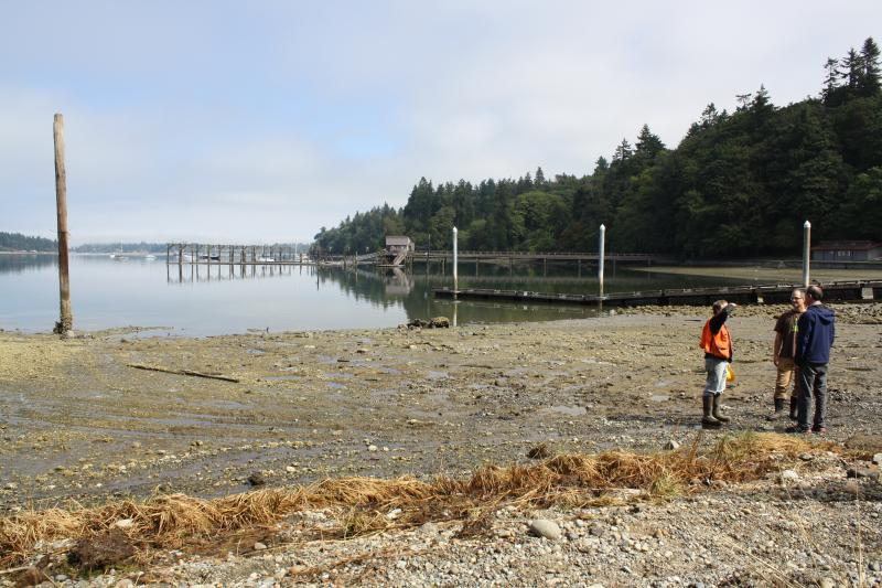 The Dockton shoreline on Maury Island.