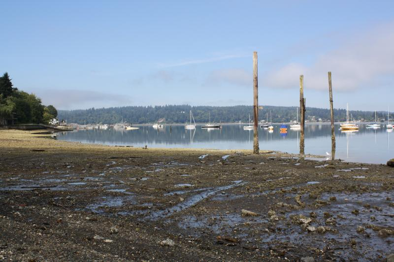 Creosote pilings at Dockton Park. They may look benign, but beneath the mud, Rabourn says they're still full of creosote, which ends up in shellfish, herring and larger predators.