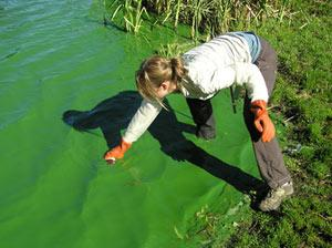 Marisa Burghdoff of Snohomish County tests an algae bloom at Lake Ketchum in the county's northwestern corner.