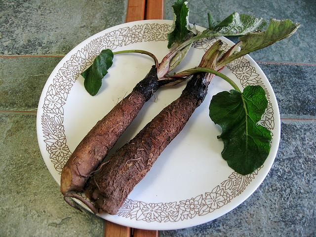 Burdock root is a natural way to keep the energy up in the cold, rainy months of a Northwest winter.