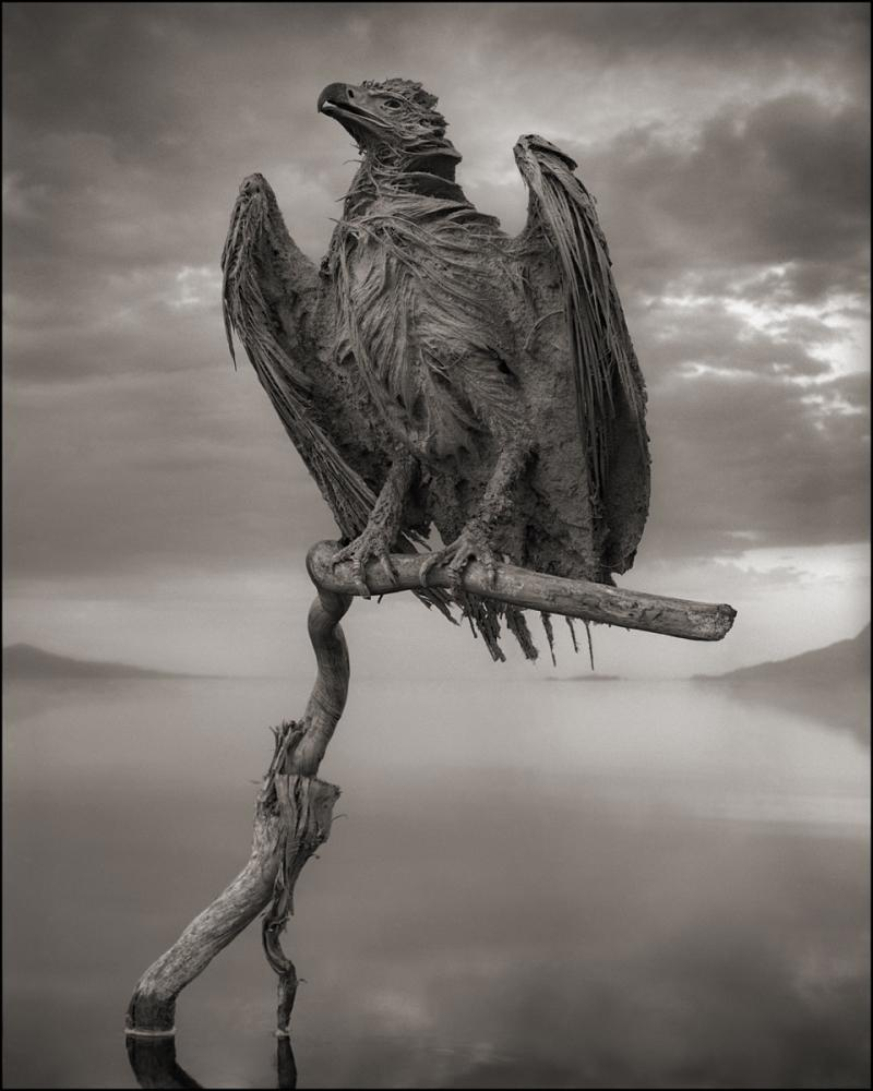 Calcified Fish Eagle, Lake Natron, 2012