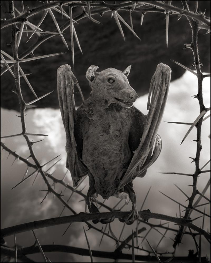 Calcified Bat II, Lake Natron, 2012