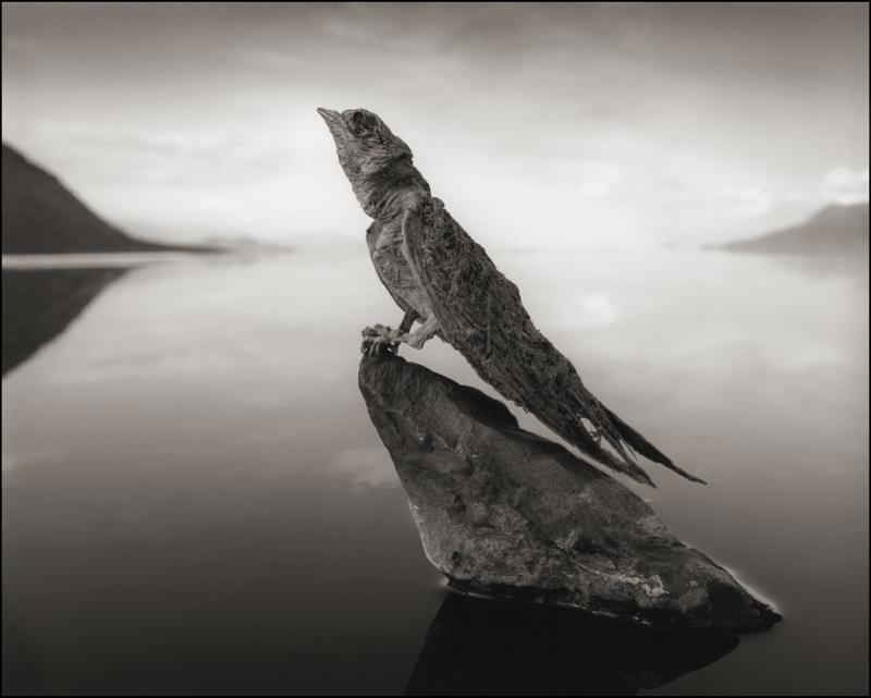 Calcified Swallow, Lake Natron, 2012