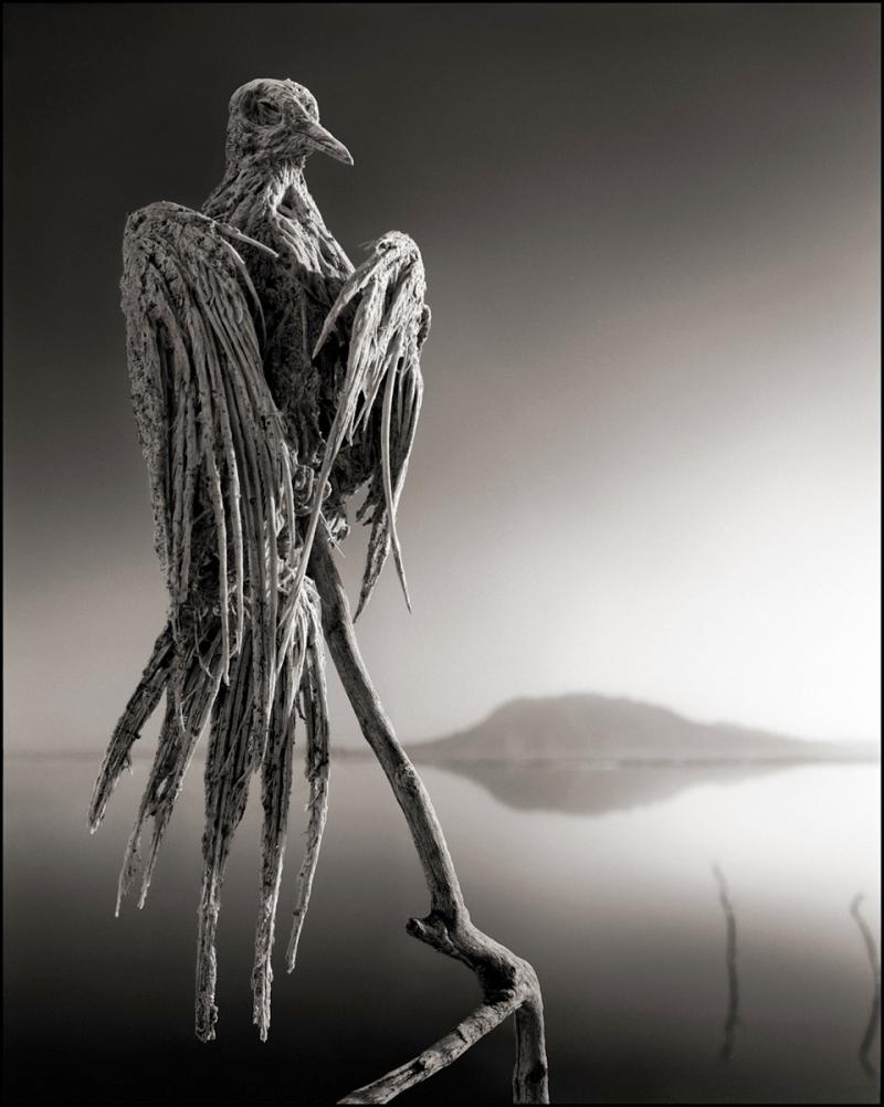 Calcified Dove, Lake Natron, 2012