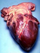 A human heart.