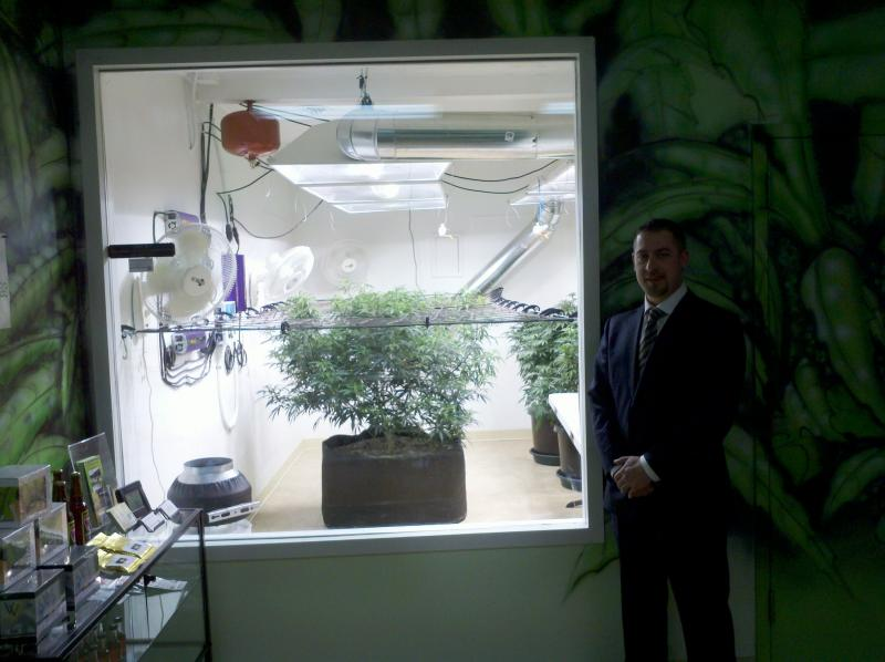 Sean Green's medical marijuana collective features a window into the light-filled grow room.