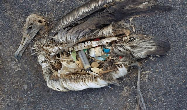Chris Jordan, a Seattle filmmaker, spent years documenting the effects of plastic pollution on albatrosses in the South Pacific. He was initially devastated by what he encountered but managed to work through his grief by facing it.