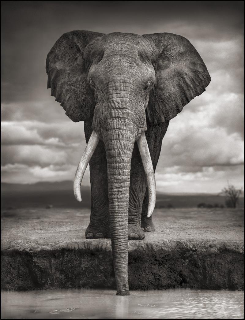 This elephant was photographed in 2007 and killed in 2009.