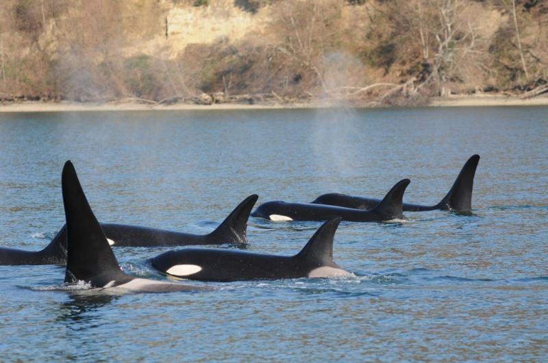 Killer whales in 2012