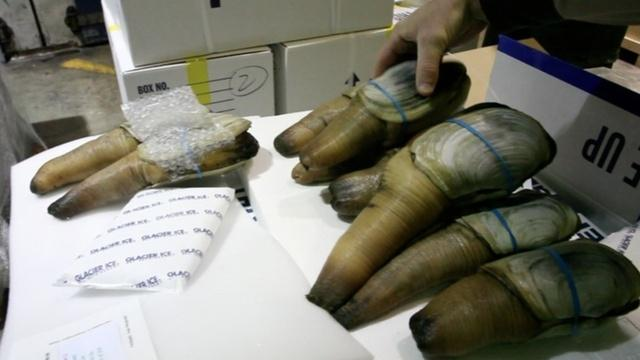 China's ban on West Coast shellfish continues nearly two months after it alerted U.S. officials of high toxins in two shipments of geoduck clams.