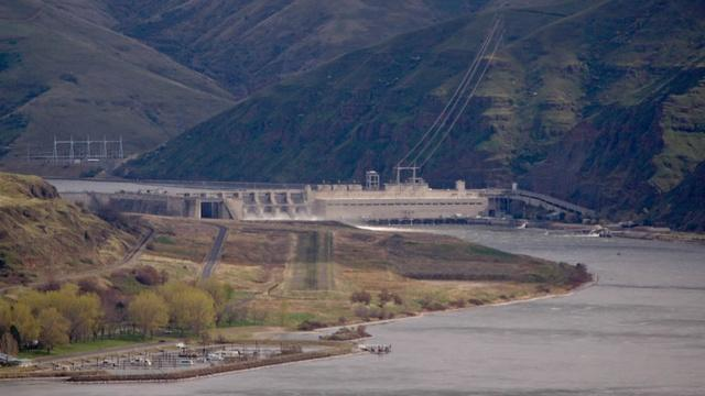 Officials at five dams on the Columbia and Snake rivers will start killing birds that eat migrating juvenile salmon. The measures are meant to protect endangered salmon and steelhead.