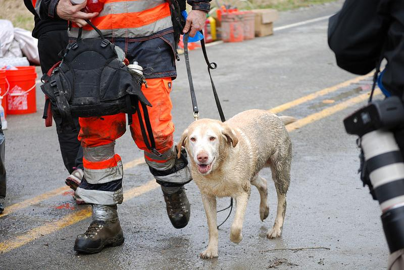 Dog rescued from mudslide debris on March 25, 2014.