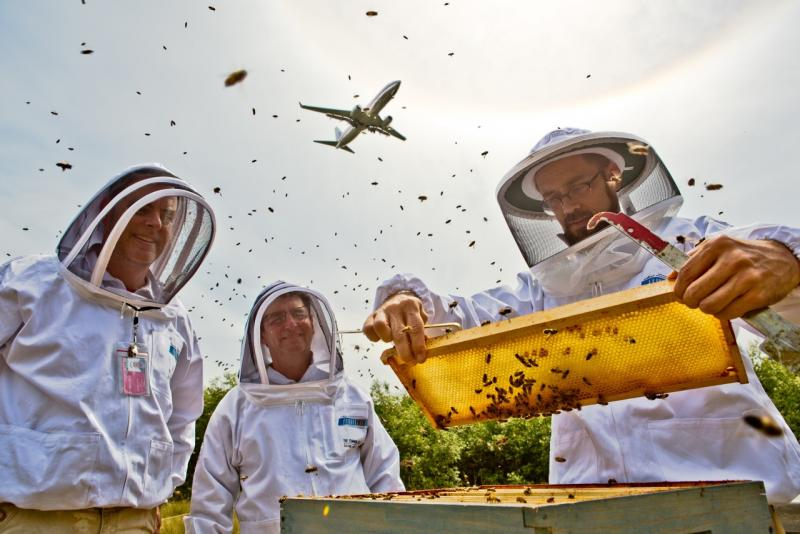 Beekeepers manage hives at Sea-Tac airport as a plane flies overhead.